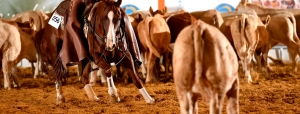 National Cutting Horse Association (NCHA) Updates