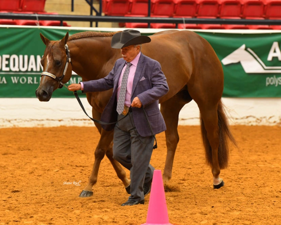 2020 Adequan® Select World Will Be Held at AQHA World Show